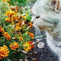 котик нюхает цветок :: Юлия Савченко