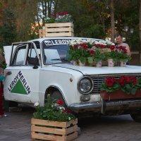 Фестиваль цветов в Самаре :: Олег Манаенков