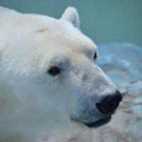 В зоопарке :: Tim Andrews