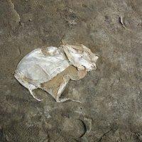 Мышь археологический. :: Эника.