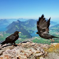 как хорошо уметь летать :: Elena Wymann