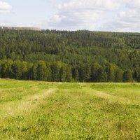 В лес :: Алексей Екимовских