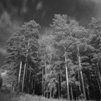 Деревья - наши друзья. :: Владилен Панченко