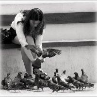Девушка и голуби :: Анатолий Винник