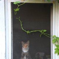 за окном.... :: Ирина Мозерова