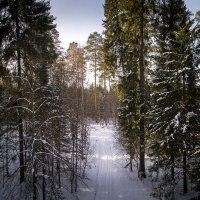 Зимний лес. :: Евгений Логинов