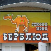 Заезженный верблюд - тут! :: Нина Бутко