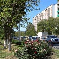 Аксай - маленький цветущий городок, уютный и тёплый, богатый щедрыми дарами садов :: Татьяна Смоляниченко