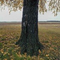 Мещёра. Заливной луг реки Пра около деревни Взвоз. :: Игорь Олегович Кравченко