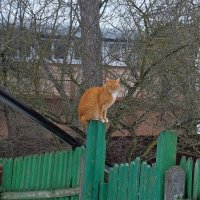 Высоко сижу, далеко гляжу :: Вадим