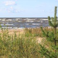 Балтийский залив. :: Наталья Лунева
