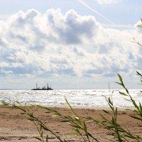 Балтийский залив. Конец лета. :: Наталья Лунева