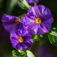 Городские цветы :: Lеsя Sеmейкинa