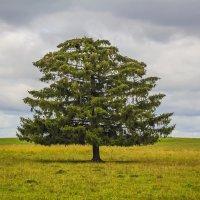 Одинокое дерево :: Галина Новинская