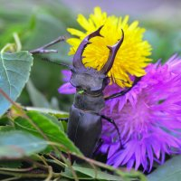 В цветах :: Наталья Усенко
