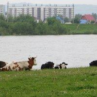А на том берегу... :: Владимир БОДАГОВ
