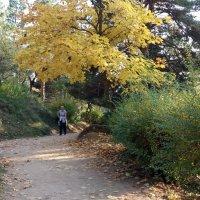 Осенняя прогулка :: Galina Solovova