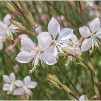 полевые цветы :: Александр