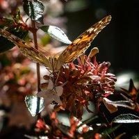 летающий цветок :: alex graf