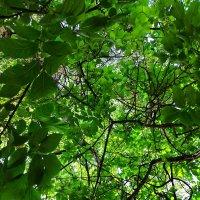 Зелёная мозаика :: Юлия Александрова