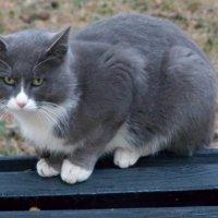 На скамейку села кошка :: Galina Solovova