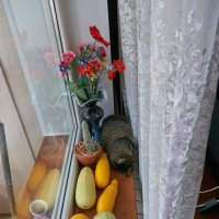 Натюрморт) :: Александр Протопопов