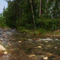 Лесной ручей :: Александр Шацких