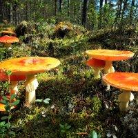 В сказочном лесу... :: Алла ZALLA