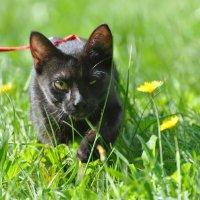 Идет охота на мышей .... :: Алексей Михалев
