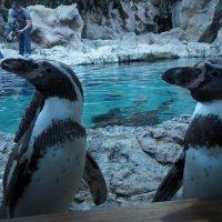 Любопытные пингвины) :: kuta75 оля оля