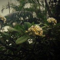 Цветущие деревья :: kuta75 оля оля