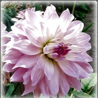 Цветы осени... :: Tamara *