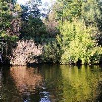 природа  Кузьминского  парка :: Наталья Чернушкина