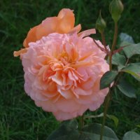 Цветы :: Наташа