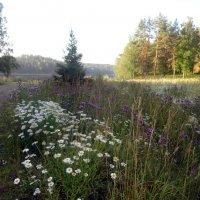 Полевые цветы :: Vyacheslav Gordeev