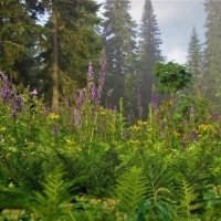 Таёжные травы :: Сергей Чиняев