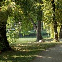 Осенний свет. :: barsuk lesnoi