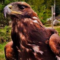 Птичка-желторотый  птенец :: Сергей