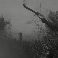 Пезаж с корнями и башней. :: Эника.