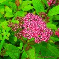 Вдыхают воздух - выдыхают цвет :: Daria Vorons