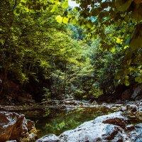 Ручей в буковом лесу :: Константин Ольховка