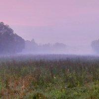 Туманное летнее утро :: Александр Бойченко