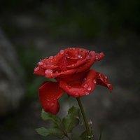 В бриллиантах дождя :: Нина Синица