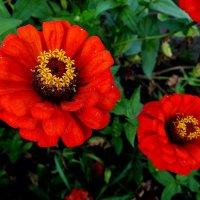 Цветочки. :: Антонина Гугаева