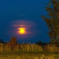 Лунный вечер :: Владимир Максимов