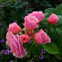 Как хороши, как свежи были розы. :: Люба