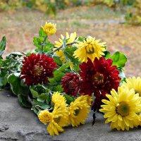 Хризантемы,мои хризантемы... :: ЛЮБОВЬ ВИТТ