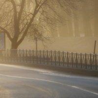 В утреннем свете....., :: Юрий Цыплятников