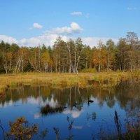 Осень на Первухинском болоте :: Зинаида Каширина
