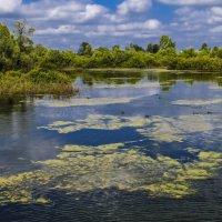 река Вичкинза (село Дивеево) :: Георгий А